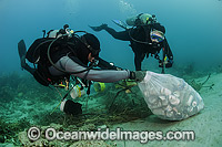 Scuba Diver picking up garbage off reef photo
