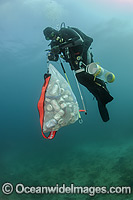 Scuba Diver with cans and garbage photo