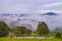 Mist in Valley Dorrigo Photo - Gary Bell