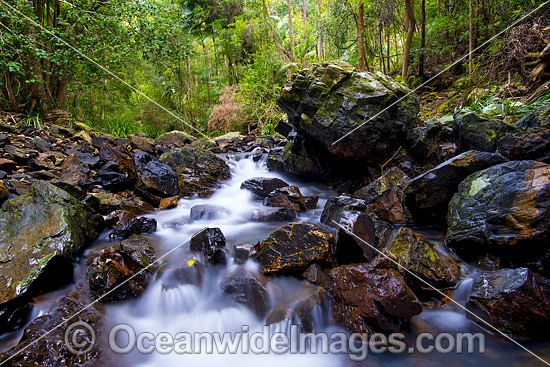 Rainforest Stream, situated in Sherwood Nature Reserve, Mid North Coast near Woolgoolga, New South Wales, Australia. Photo - Gary Bell