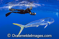 Diver and Dolphinfish image