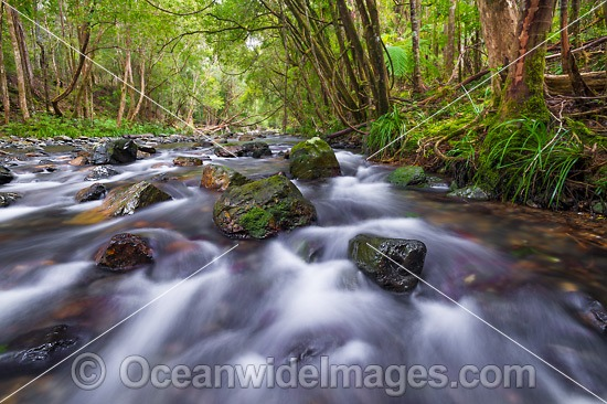 Rainforest Stream, situated on Urumbilum River in the Bindarri National Park, near Coffs Harbour, New South Wales, Australia. Photo - Gary Bell