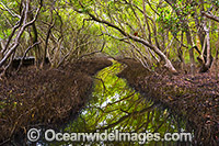 Mangroves Coffs Harbour Photo - Gary Bell