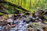 Gondwana Rainforest Stream Photo - Gary Bell