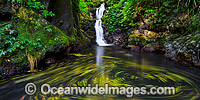 Lower Toolona Falls Lamington Photo - Gary Bell