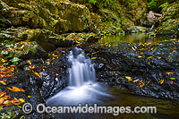 Urumbilum River Coffs Harbour Photo - Gary Bell