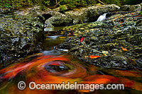 Floating Leaves on Urumbilum River Photo - Gary Bell