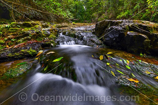 Rainforest waterfall on the Sassafras Creek, situated in the Dorrigo National Park, part of the Gondwana Rainforests of Australia World Heritage Area. New South Wales, Australia. Photo - Gary Bell
