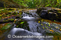Dorrigo National Park waterfall Photo - Gary Bell