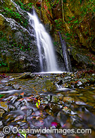 Callicoma Falls Dorrigo National Park Photo - Gary Bell