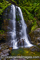 Red Ceder Falls Dorrigo National Park Photo - Gary Bell