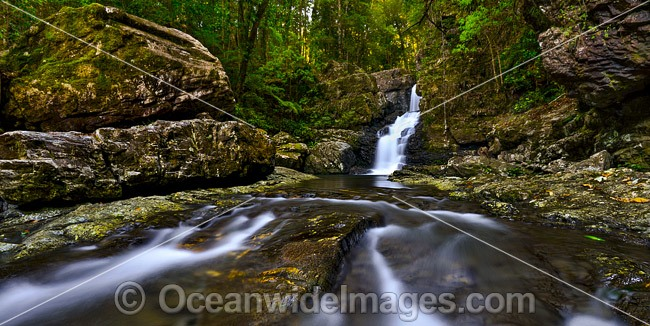 Coachwood Falls, situated in the Dorrigo National Park, part of the Gondwana Rainforests of Australia World Heritage Area. New South Wales, Australia. Photo - Gary Bell