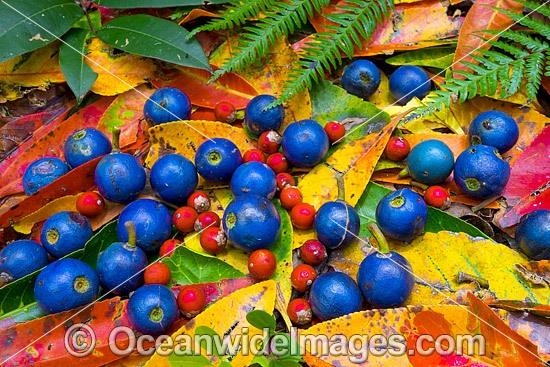 Australian Rainforests Photos, Pictures & Images