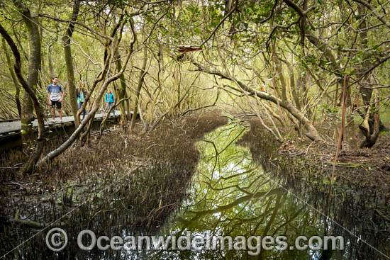 Mangroves Coffs Harbour photo