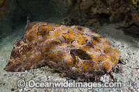 Banded Wobbegong Shark Photo - Gary Bell