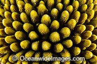 Hard Coral Christmas Island Photo - Gary Bell