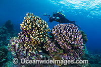Underwater Photographer diving Christmas Island Photo - Gary Bell