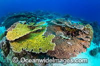 Christmas Island Coral Reef Photo - Gary Bell