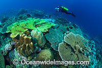 Underwater Photographer Christmas Island photo