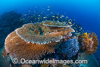 Christmas Island Coral Reef photo