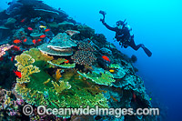 Coral Reef Christmas Island Photo - Gary Bell