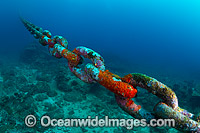 Mooring chain Christmas Island Photo - Gary Bell