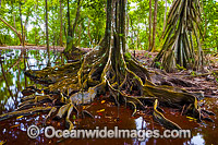 Christmas Island Rainforest and Natural spring Photo - Gary Bell