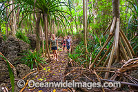 Boardwalk track Christmas Island Photo - Gary Bell