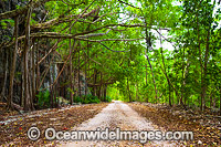 Rainforest track Christmas Island Photo - Gary Bell