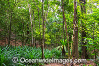 Rainforest Christmas Island Photo - Gary Bell