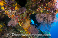 Coral Reef cave Christmas Island Photo - Gary Bell