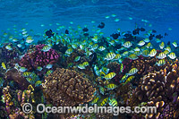 Fish and Coral Christmas Island image