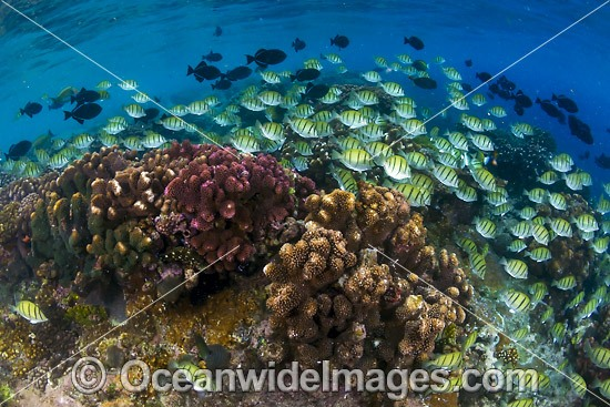 Fish and Coral Christmas Island photo