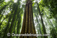 Dorrigo Rainforest Photo - Gary Bell