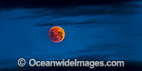 Blood Moon Photo - Gary Bell