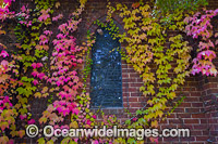Autumn Leaves on chapel Photo - Gary Bell