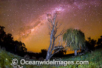 Stars of the night sky Photo - Gary Bell