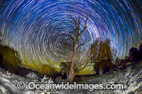 Star trails Photo - Gary Bell