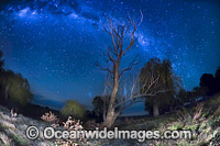 Stars New South Wales Photo - Gary Bell