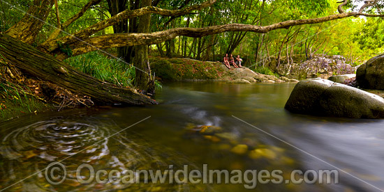 Never Never River rainforest stream, situated in the Promised Land, near Bellingen, New South Wales, Australia. Photo - Gary Bell