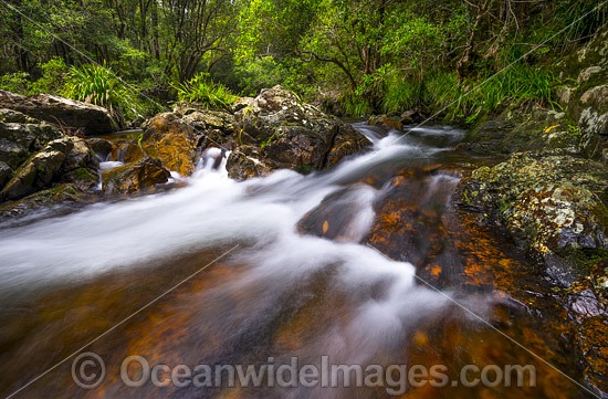 Rainforest Stream rocky rapids, situated on Urumbilum River in the Bindarri National Park, near Coffs Harbour, New South Wales, Australia. Photo - Gary Bell
