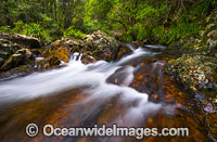 Urumbilum River Bindarri National Park Photo - Gary Bell