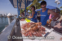 Volunteers count invasive Lionfish Photo - Michael Patrick O'Neill