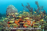 Fish and coral Palm Beach photo