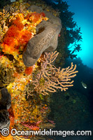 New Zealand Reef Scene image