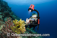 Diver photographing Feather star Photo - David Fleetham