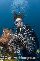 Scuba Diver and Lionfish Photo - David Fleetham