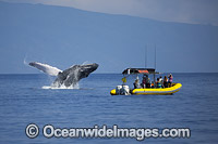 Humpback Whale Tourism photo