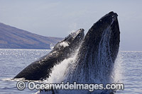 Humpback Whale Photo - David Fleetham