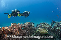 Divers and Green Sea Turtle Photo - David Fleetham